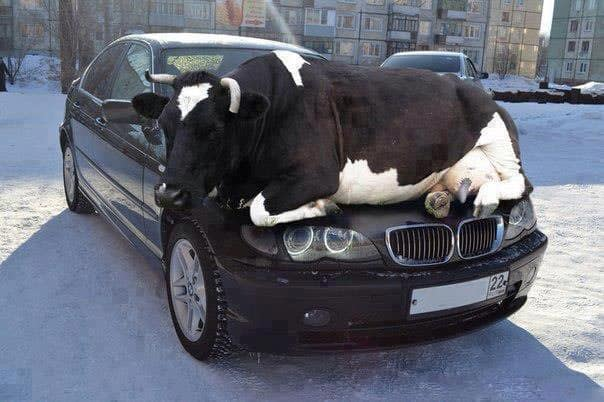 Funny Unlucky BMW Of The Day Will Blow Your Mind