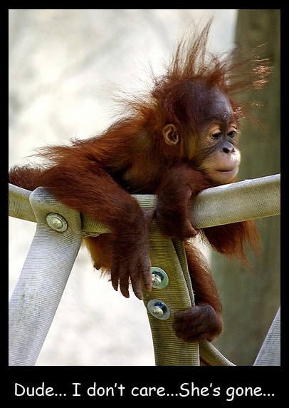 Funny Bored Monkey Picture Will Shock You