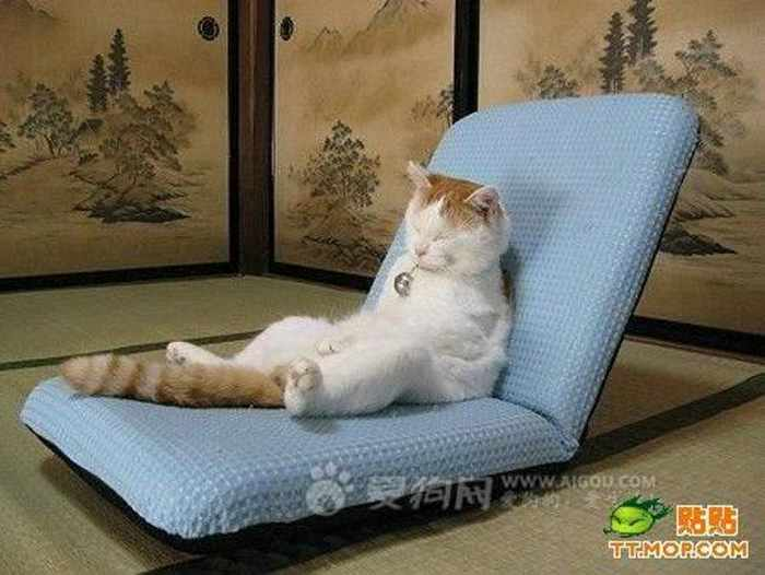 15 Cute Funny Cat Pictures That Are Hilarious -12