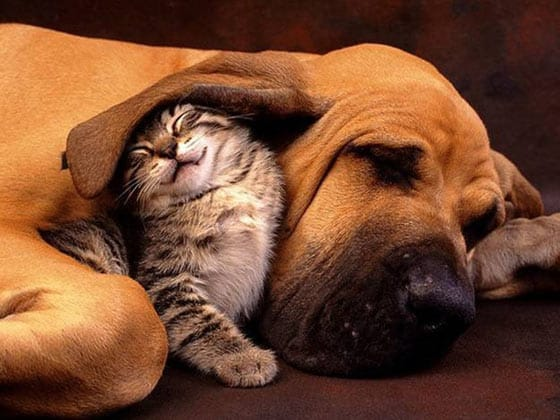 Top 10 Funny And Weird Images of Cat And Dog Love Each Other -01