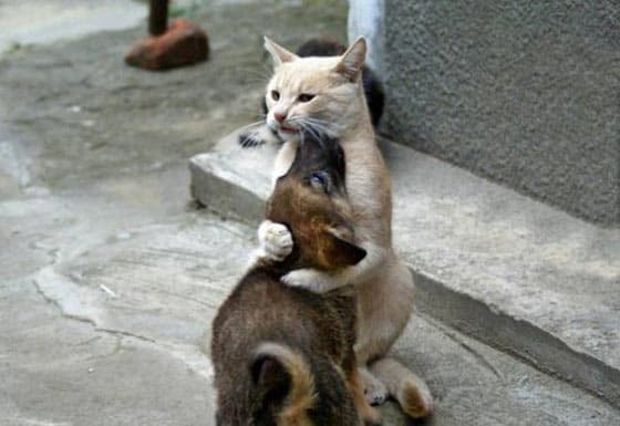 Top 10 Funny And Weird Images of Cat And Dog Love Each Other -04