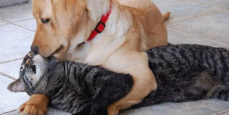 Top 10 Funny And Weird Images of Cat And Dog Love Each Other