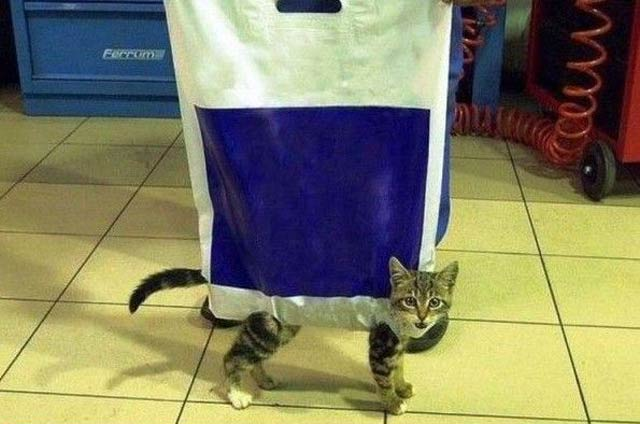 The Funny Cat Bag That is Mind Blowing