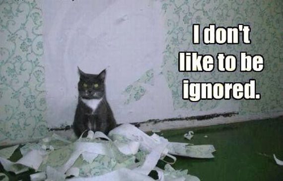 Funny Cat Don't Like To Be Ignored