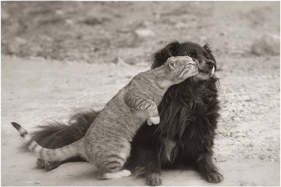Hard Kiss by Funny Cat to A Dog That Will Shock You