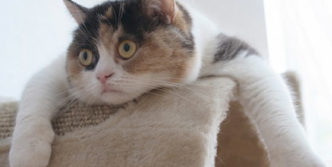 Funny Surprised Cat Will Blow Your Mind