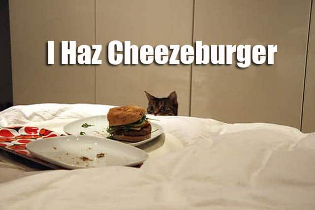I Has Cheezburger. Do you want it?