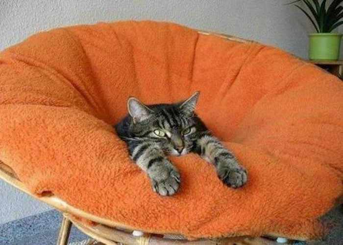 Funny Cats Captured At Unusual Time - 17 Pics -04