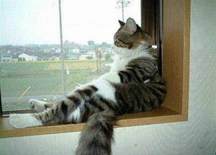 Funny Cats Captured At Unusual Time - 17 Pics -13