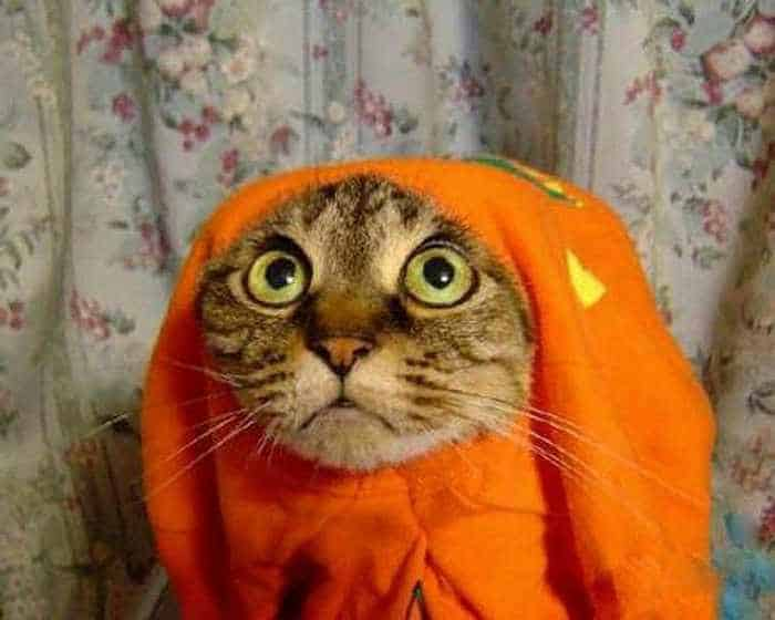 Funny Cats Captured At Unusual Time - 17 Pics -14