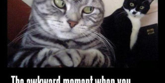 Funny And Weird Face of Cats Will Make You Laugh