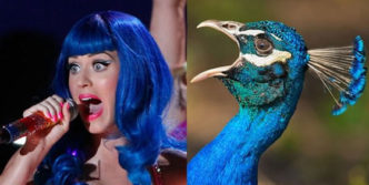 10 Funny Pop Star Celebrities Looks Like Bird Will Blow Your Mind
