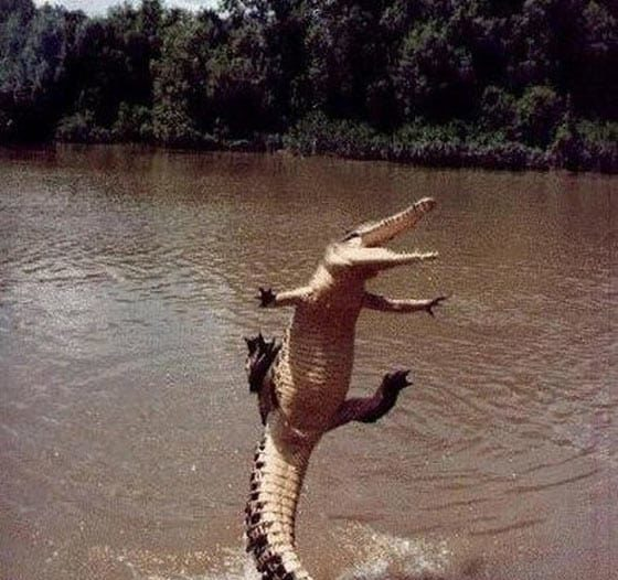 funny-dancing-crocodile