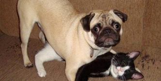 Vodafone Dog Captured With Funny Cat That Will Shock You
