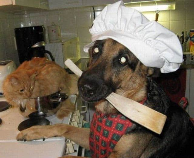 Who Want Dog Chef? Best Ever Chief Cook of the Day
