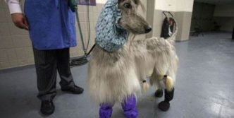 Funny Fashionable Dog That You Want at Your Home