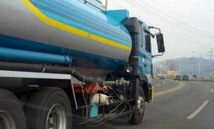 Funny Doghouse in Truck That You Never Seen Before_01