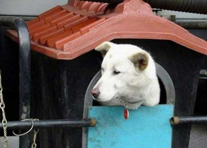 Funny Doghouse in Truck That You Never Seen Before_05