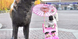 Funny Nanny Dog Of The Day