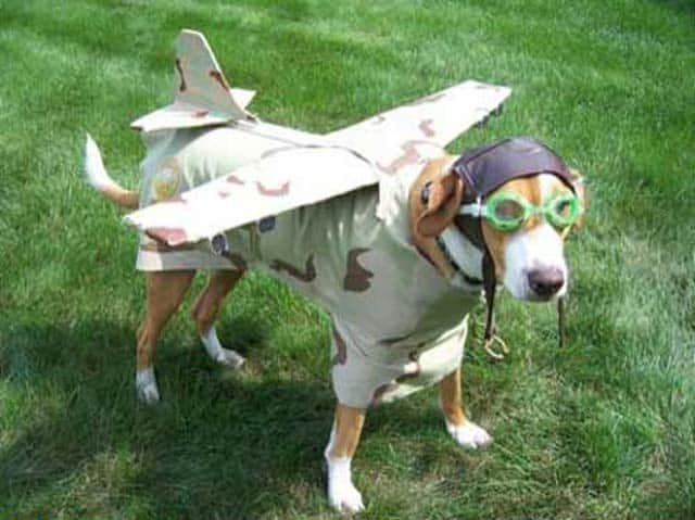 Funny Airplane Dog That Will Blow Your Mind