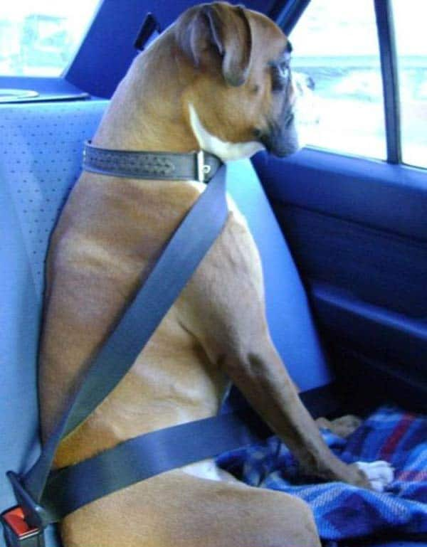 Safety Belt For Dog That Will Blow Your Mind