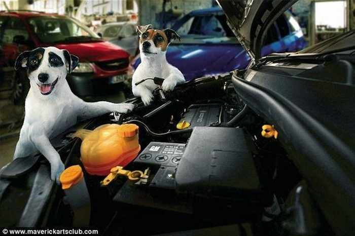 12 Mind-blowing Funny Pictures of Mechanic Dogs -02