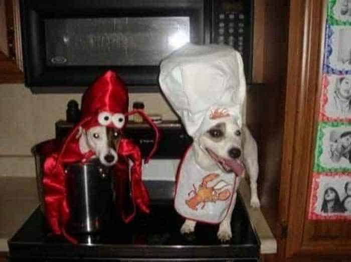 10 Hilarious Dogs in Funny Costumes That Will Blow Your Mind -02