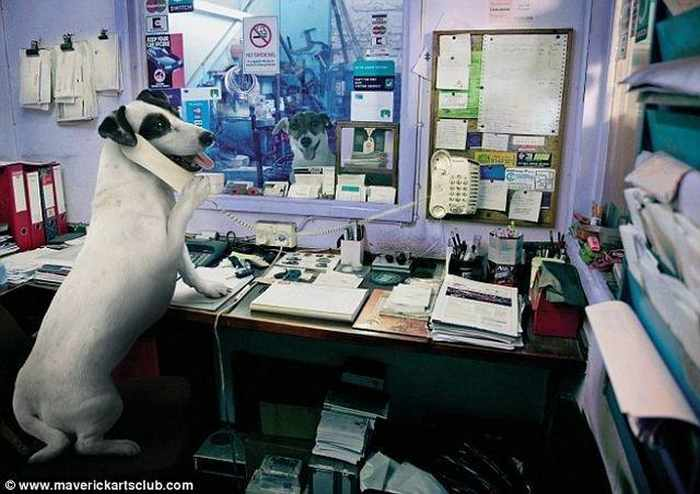 12 Mind-blowing Funny Pictures of Mechanic Dogs -03