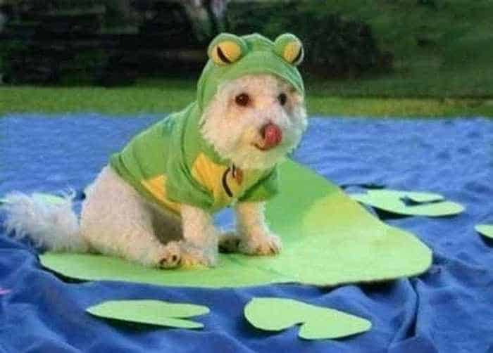 10 Hilarious Dogs in Funny Costumes That Will Blow Your Mind -03