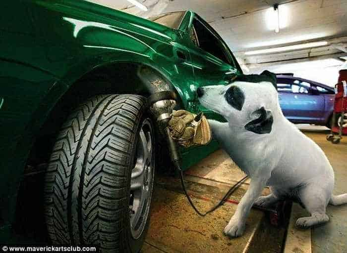 12 Mind-blowing Funny Pictures of Mechanic Dogs -04