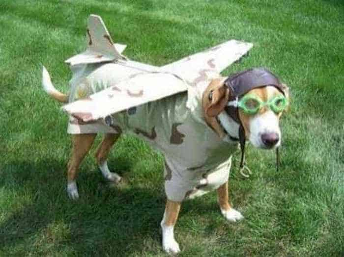 10 Hilarious Dogs in Funny Costumes That Will Blow Your Mind -04