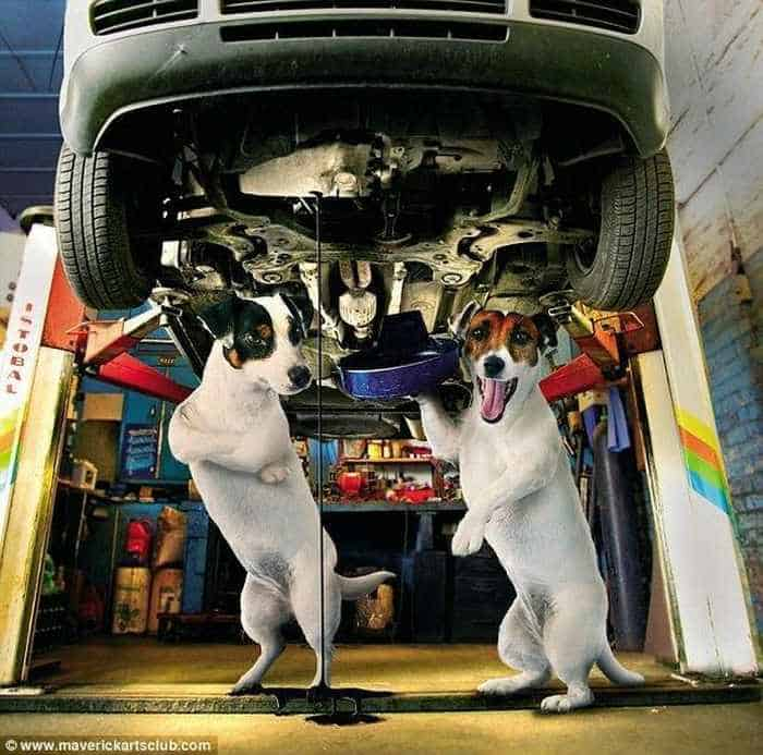 12 Mind-blowing Funny Pictures of Mechanic Dogs -06