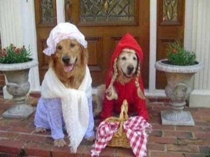 10 Hilarious Dogs in Funny Costumes That Will Blow Your Mind -06