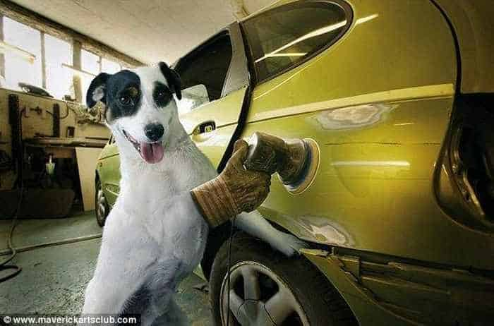 12 Mind-blowing Funny Pictures of Mechanic Dogs -07