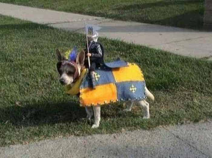 10 Hilarious Dogs in Funny Costumes That Will Blow Your Mind -07