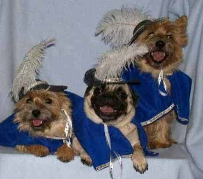 10 Hilarious Dogs in Funny Costumes That Will Blow Your Mind -08