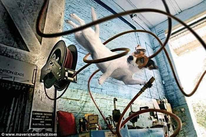 12 Mind-blowing Funny Pictures of Mechanic Dogs -09