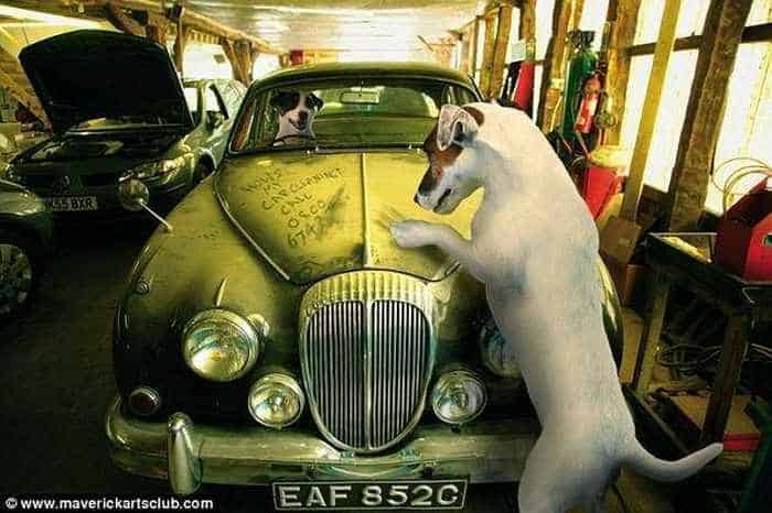 12 Mind-blowing Funny Pictures of Mechanic Dogs -10