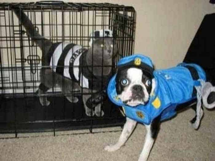 10 Hilarious Dogs in Funny Costumes That Will Blow Your Mind -10