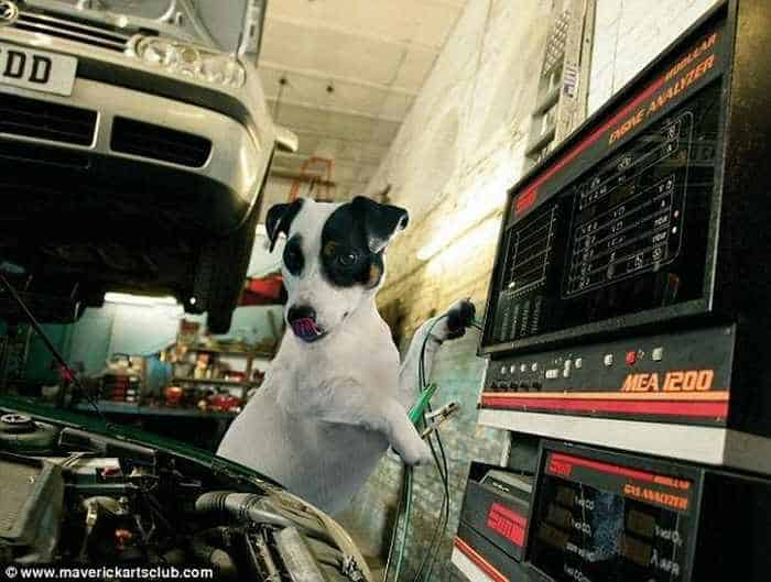 12 Mind-blowing Funny Pictures of Mechanic Dogs -11