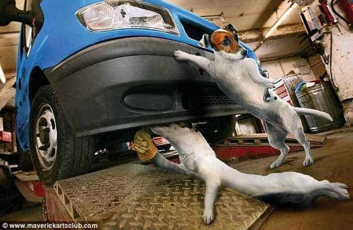 12 Mind-blowing Funny Pictures of Mechanic Dogs -12