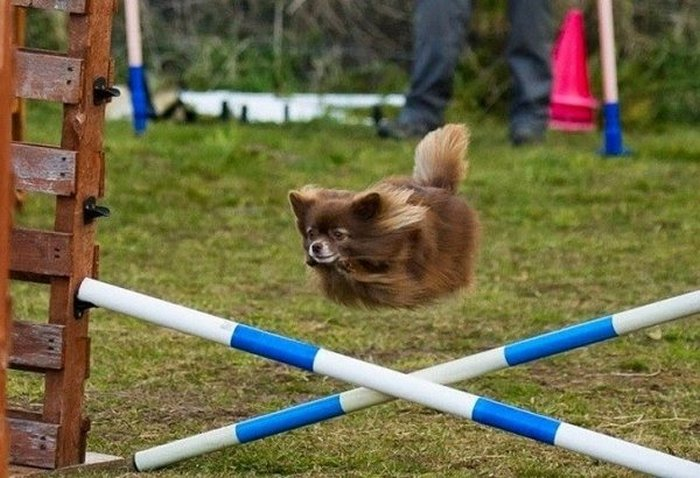 Funny Dogs That Will Make Your Day (52 Pics)-18