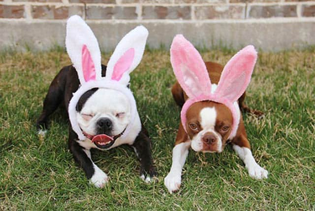 Funny Easter Dogs That will Make you LOL