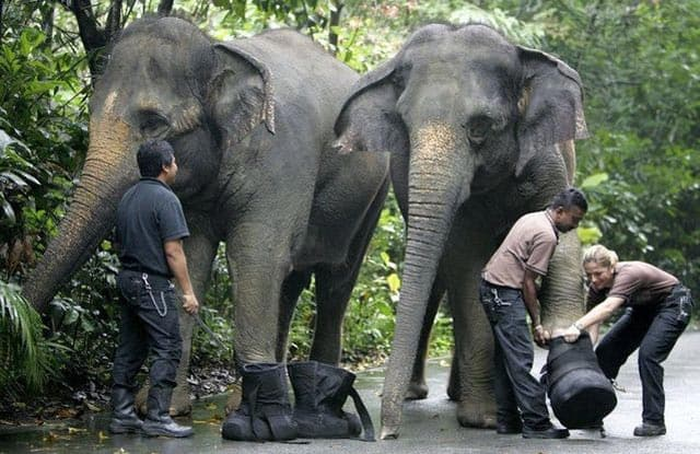 Funny Shoes For Elephant That Every Animal Lover Like