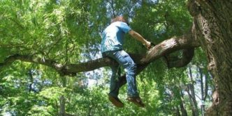 Epic Fail Tree Cutting Will Make Your Day