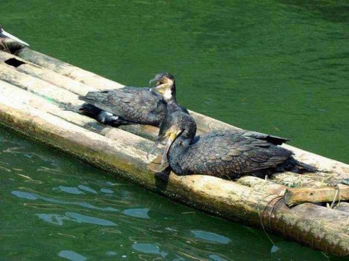 How to Fish : 9 Funny Pics of Unusual Funny Fishing -04
