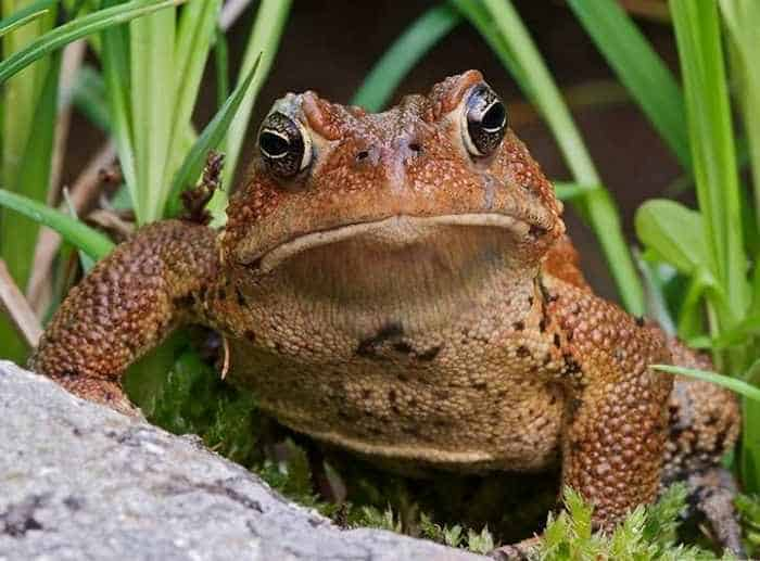 13 Cool Funny Frog Pictures -07