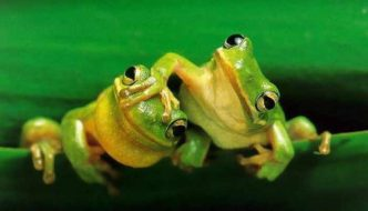 13 Cool Funny Frog Pictures