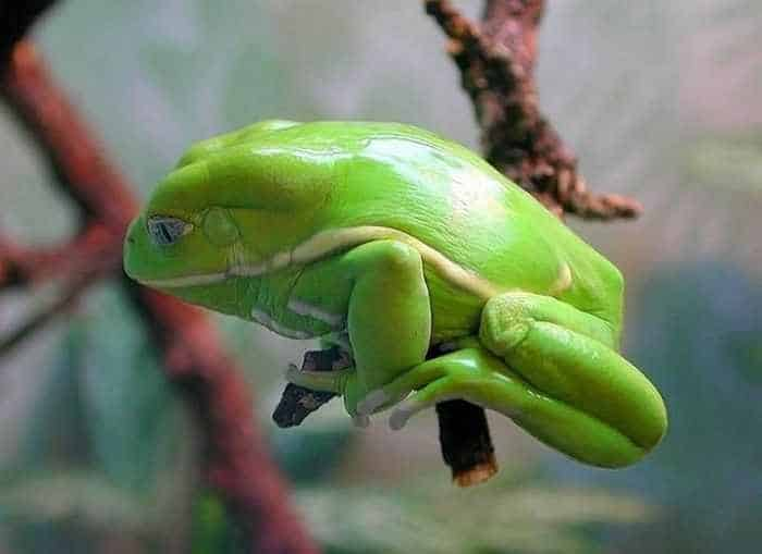 13 Cool Funny Frog Pictures -13