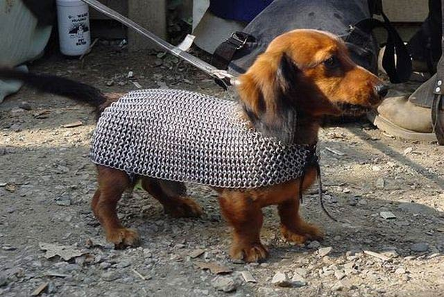 Funny Dog is The Gladiator Of Animal Planet